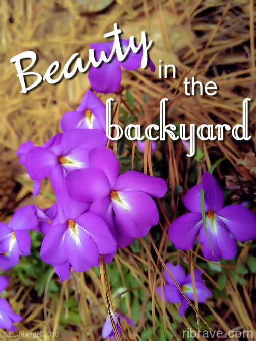 beauty-in-the-backyard-ribrave