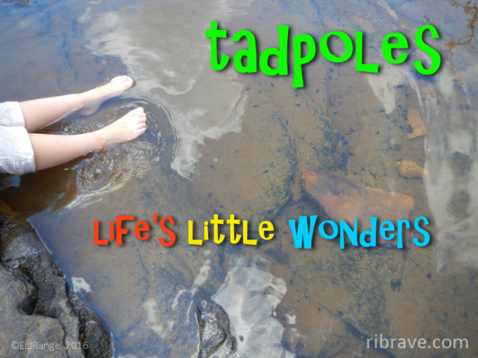 learn-about-tadpoles-ribrave-family-waterfalls